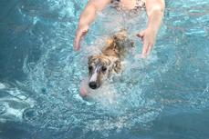 """Rickie"" (Pup 4 Male) takes his first swim safety lesson at Nysa Hill.  Dam Epic is an avid swimmer, Viggo too!"